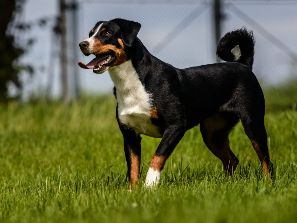 unsere Hunde vom Zieglerhof